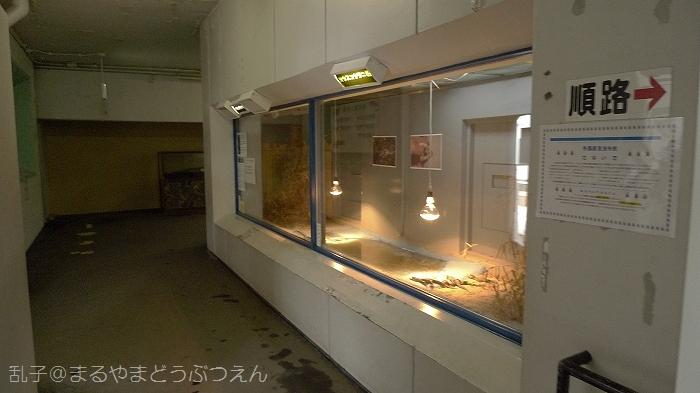 kyukaoku1_20110325164510.jpg