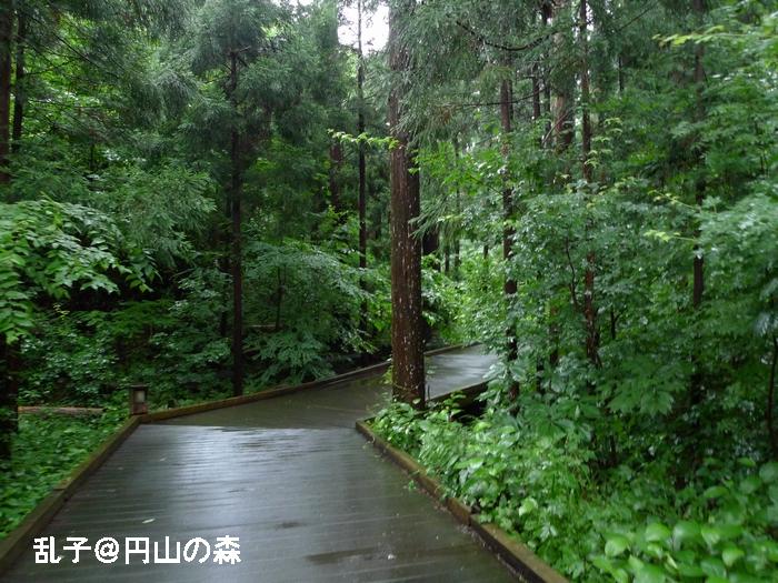 maruyamamori20100729.jpg