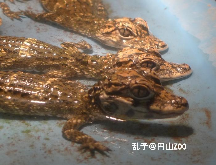 maruyamazoo2010072911.jpg