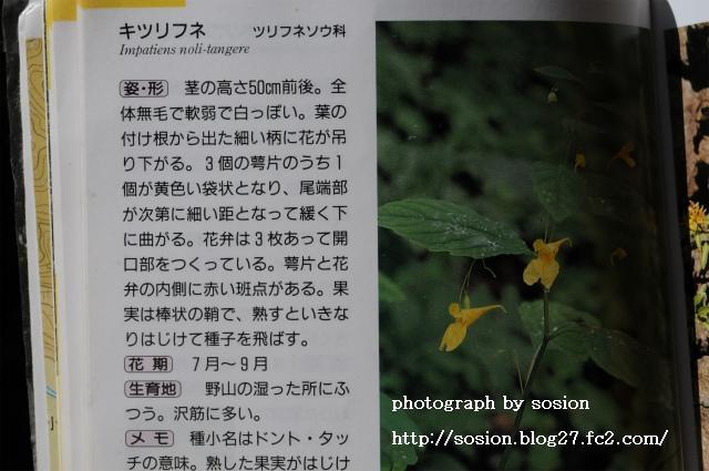 maruyamazoomori2010101121.jpg