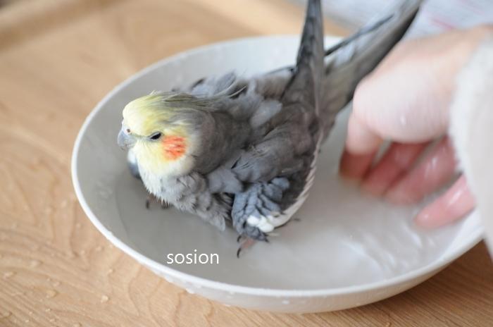 sosion20110416a.jpg