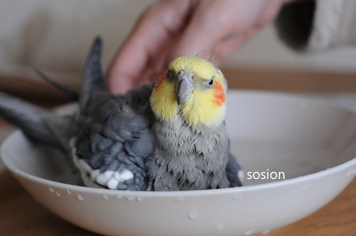 sosion20110416e.jpg