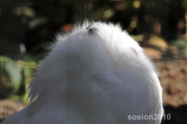 sosionblog20101025maruyamazoo26.jpg