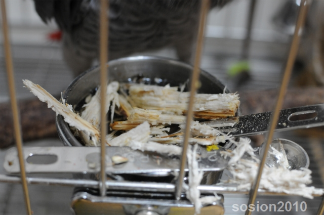sosionblog2010102602.jpg