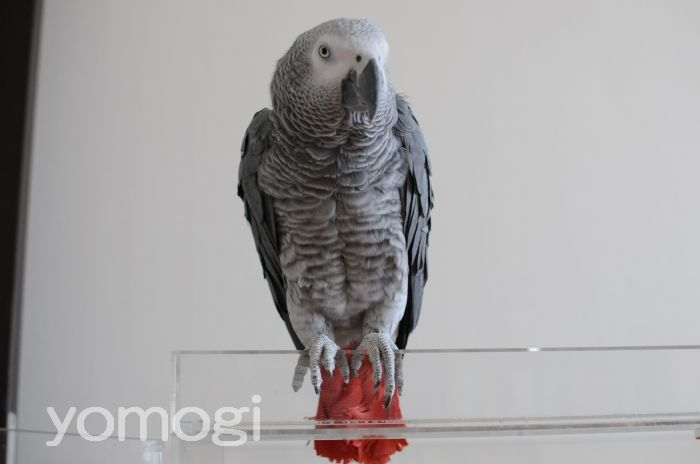 yomogi20110331.jpg