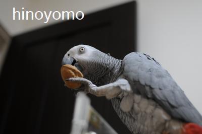yomogisamatokurumi.png