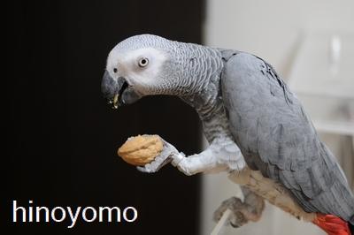 yomogisamatokurumi02.jpg