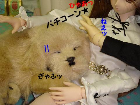 100726-dog-06-5.jpg