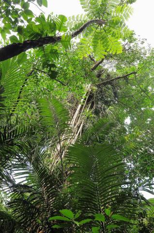 亜熱帯照葉樹林の内部