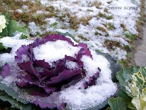 雪景色?!
