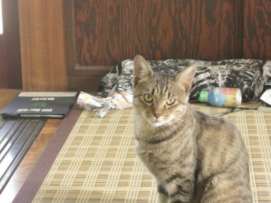 syukusyougonogazou20_20110221214046.jpg