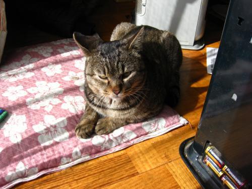 syukusyougonogazou59_20110621222935.jpg