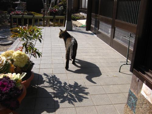 syukusyougonogazou92_20110729224903.jpg
