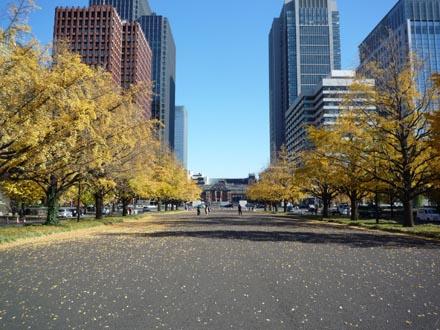 東京駅の銀杏並木