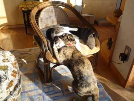 椅子の取り合い4