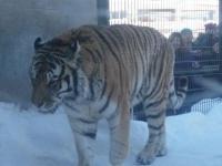 旭川動物園④