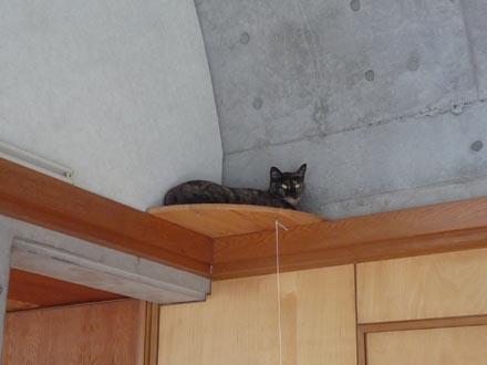 猫台で横たわる蘭①