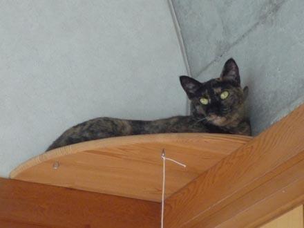猫台で横たわる蘭②