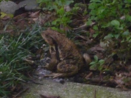 視線の先は蛙でした