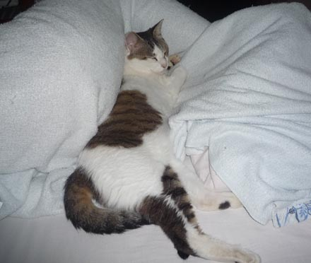 凛 ベッドを占領す
