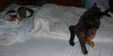 凛・蘭 ベッドを占領す