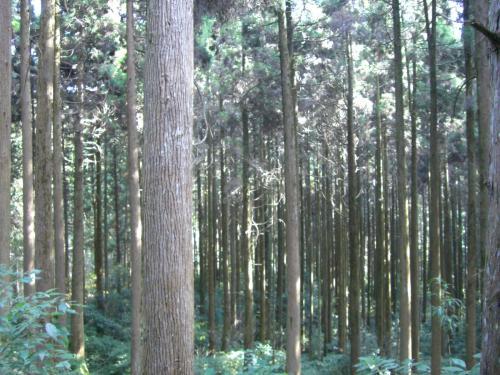 有村家の森