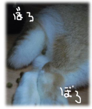 2009063003.jpg