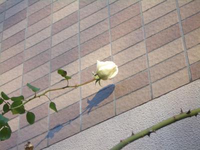 新雪?今年最後の花?