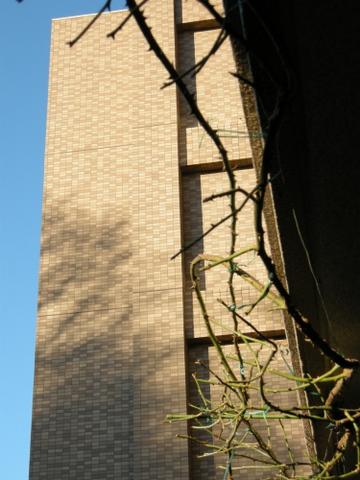 公園の木立の影 2009/1/15