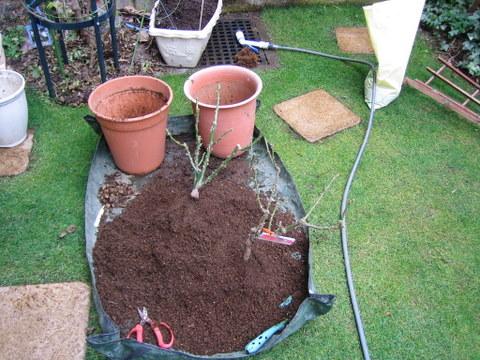 バラの土のリサイクル
