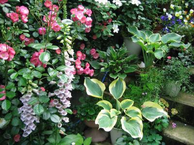 5月の庭(ジギタリス)