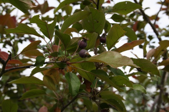 紫竹ガーデン10