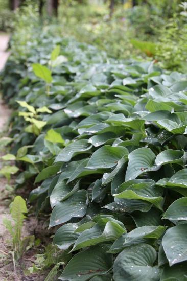 紫竹ガーデン6