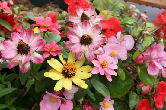 柳月 お花3