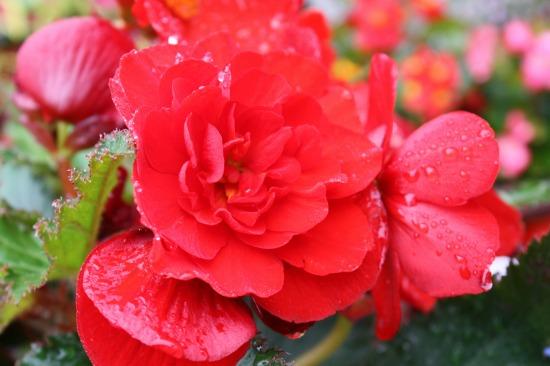 柳月 お花2