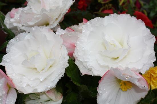 柳月 お花1