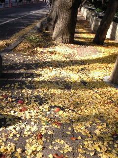 200812010940000黄色の絨毯