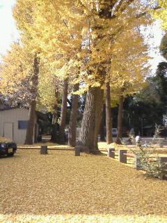200812061034001浅間神社