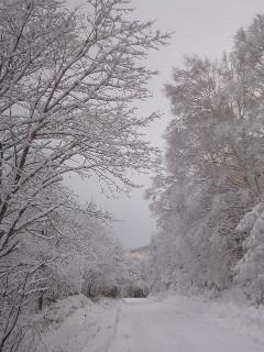 200902011051000雪景色