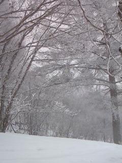 201002131347000樹氷