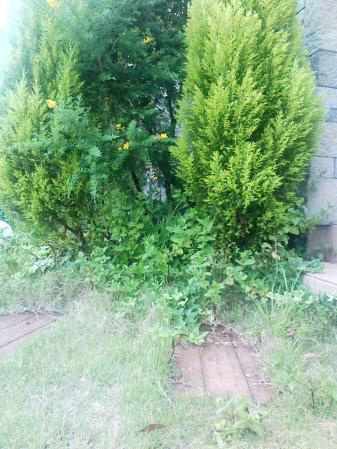 ミントの咲く庭