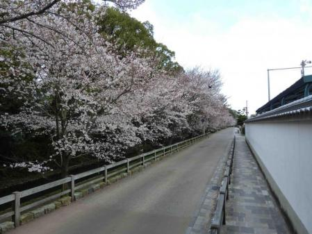 cherry+blossom+beyond+the+white+wall_convert_20100329111624.jpg