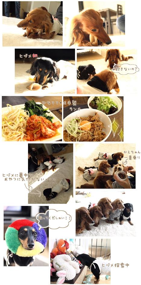 0901037_20090104094938.jpg