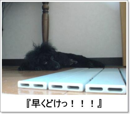 20090716133537.jpg