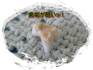 20090901111912.jpg