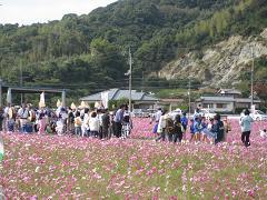 kosumosuawaodori.jpg