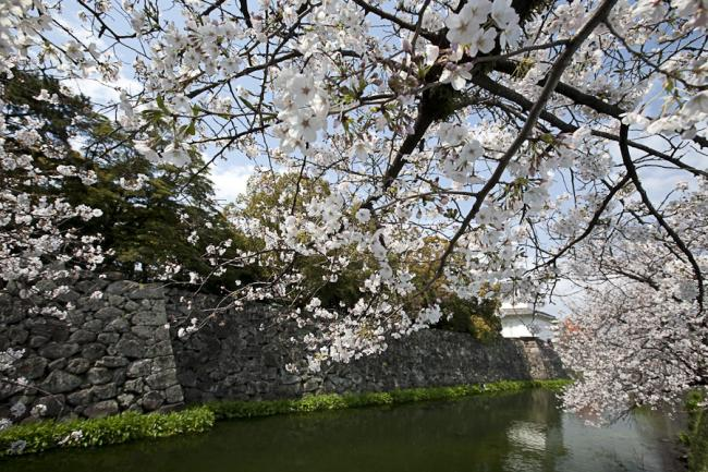 桜(大分)-3