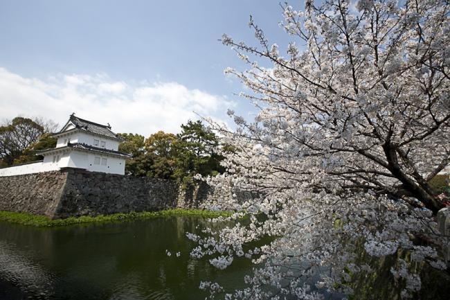 桜(大分)-6