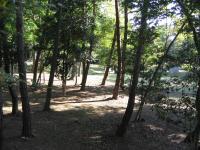 県央の森公園キャンプ場_16