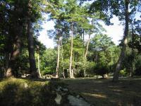 県央の森公園キャンプ場_24
